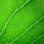 leaf_pattern_by_ccplazza-d56m8eg